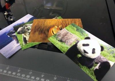 Impression de carte postale
